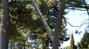 От 27 до 29 октомври затварят улици в Плевен заради кастрене на дървета