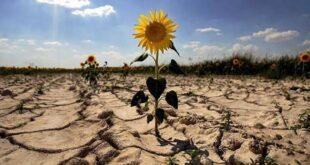 Нова мярка ще насърчава застраховането на земеделска продукция от бедствия