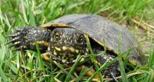 Подобряване на приридозащитното състояние на видове от мрежата Натура 2000 чрез подхода ВОМР в територията на МИГ Белене-Никопол
