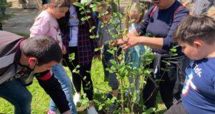 Розови храсти засадиха в училищата в община Левски на Деня на Земята
