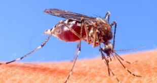 Предстои въздушна обработка срещу комари в община Гулянци