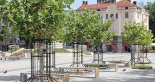 В Плевен подкастрят короните на дърветата в пешеходната зона