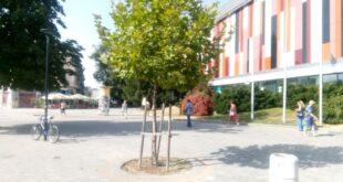 Фиданки ще заменят премахнатите стари или болни  дървета по плевенските улици
