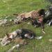 Ужас! Мъртви и умиращи животни до село Радомирци